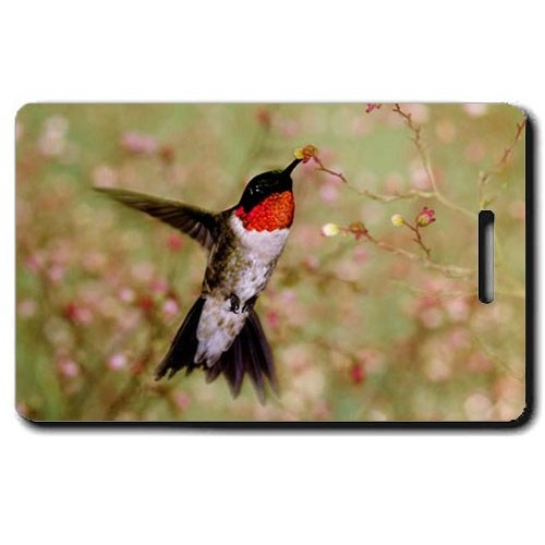 RUBY THROAT HUMMINGBIRD LUGGAGE TAG
