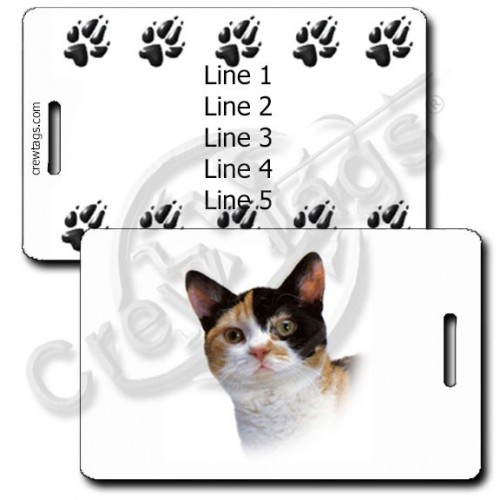 AMERICAN WIREHAIR CAT WITH PERSONALIZED PAW PRINT BACK LUGGAGE TAGS